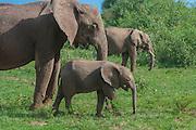 Elephant family, Lake Manyara National Park, Tanzania