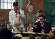 © Licensed to London News Pictures. 21/12/2012. Reading, UK The auction takes place with each bird sold individually. Auction house Thimbleby and Shorland holds its annual traditional christmas poultry sale today 21st December 2012 in Reading, Berkshire. Over 500 lots of fresh turkeys, chickens, geese and duck, all oven ready and rough plucked were available for sale. The general public in the UK are reported  to spend over 300 million GBP on turkey over the Christmas season.. Photo credit : Stephen Simpson/LNP