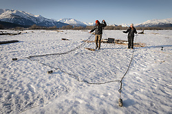 Steve Lewis, Raptor Management Coordinator, U.S. Fish & Wildlife Service (left), and Rachel Wheat, a graduate student at the University of California Santa Cruz, demonstrate the size and reach of the net launcher used to capture bald eagles on the Chilkat River. The net launcher, sometimes also referred to as a ballistic net, uses three projectiles that are attached to a large lightweight net. A salmon carcass is used at bait in front of the launcher. A radio-controlled trigger to launch the net is used when an eagle lands next to the bait. The trap was used to capture bald eagles for a study being conducted by Rachel Wheat, a graduate student at the University of California Santa Cruz. Wheat is conducting a bald eagle migration study of eagles that visit the Chilkat River for her doctoral dissertation. She hopes to learn how closely eagles track salmon availability across time and space. The bald eagles are being tracked using solar-powered GPS satellite transmitters (also known as a PTT - platform transmitter terminal) that attach to the backs of the eagles using a lightweight harness. During late fall, bald eagles congregate along the Chilkat River to feed on salmon. This gathering of bald eagles in the Alaska Chilkat Bald Eagle Preserve is believed to be one of the largest gatherings of bald eagles in the world.