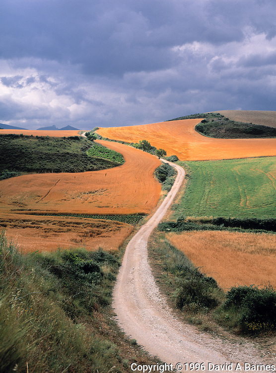 Dirt country road through wheat fields, Navarra, Spain