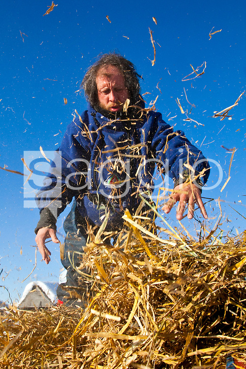 Sebastian Schnuelle, bib #31, spreads out hay, which is used as bedding, for his dogs in the Kaltag check-point during the 2011 Iditarod Trail Sled Dog Race.