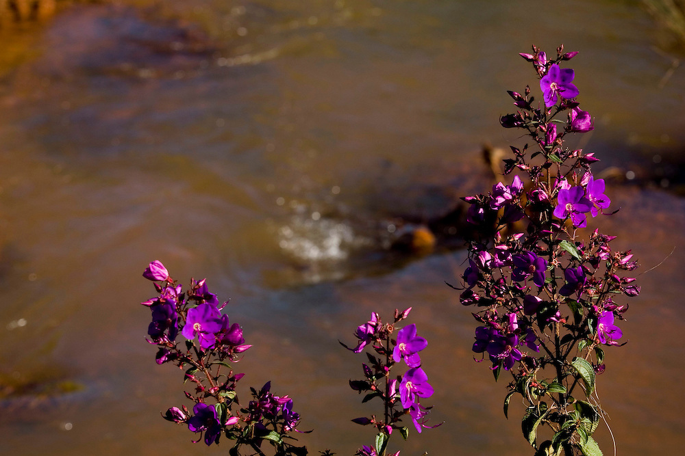 Jeceaba_MG, Brasil...Detalhe de uma flor em frente a um riacho em Jeceaba, Minas Gerais...Detail of a flower in front of a stream in Jeceaba, Minas Gerais...Foto: BRUNO MAGALHAES /  NITRO