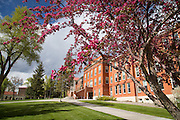 Trees bloom on the springtime campus of Western State Colorado University.