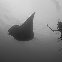 My friend Amy shooting video of a Manta Ray at the Socorro Islands, off the coast of Cabo San Lucas, Mexico.  This picture gives a great sense of scale, as the young lady measures 5 ft 2 in.