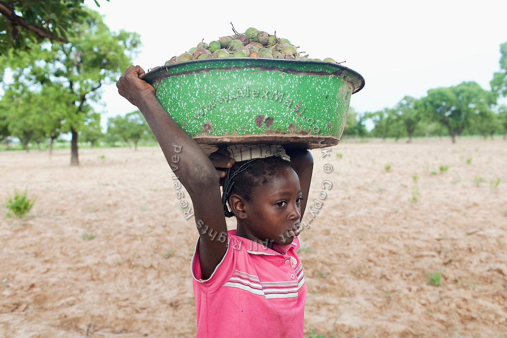 In the early morning, Hassana Ibrahim, 11, is walking back to her village to attend school, after having collected a load of Shea nuts to help supporting her family, in Boggu, Tamale, northern Ghana.
