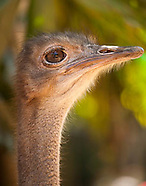 These portraits of birds of prey and the emu were taken in Darwin.