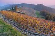 View on vineyards of Langhe Roero Monferrato, UNESCO World Heritage in Piedmont, Italy.