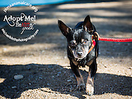Johnny - this nine year old was surrendered by his owners.