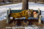 Homeless man age 50 sleeping on park bench. St Paul Minnesota USA