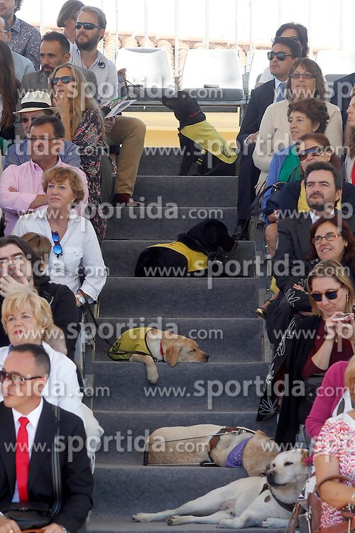 24.09.2015, Madrid, ESP, 25 Jahre Perro Guia ONCEs Foundation, im Bild Guide dogs // during the 25th anniversary of 'Perro Guia ONCE's Foundation'. in Madrid, Spain on 2015/09/24. EXPA Pictures &copy; 2015, PhotoCredit: EXPA/ Alterphotos/ Acero<br /> <br /> *****ATTENTION - OUT of ESP, SUI*****
