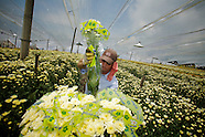 Colombia Flower industry