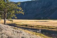 Open meadows along the Madison River provide a  wildlife habitat area. Yellowstone National Park, Wayomig, USA.