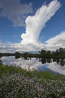 Connecticut River, Maidstone, Vermont
