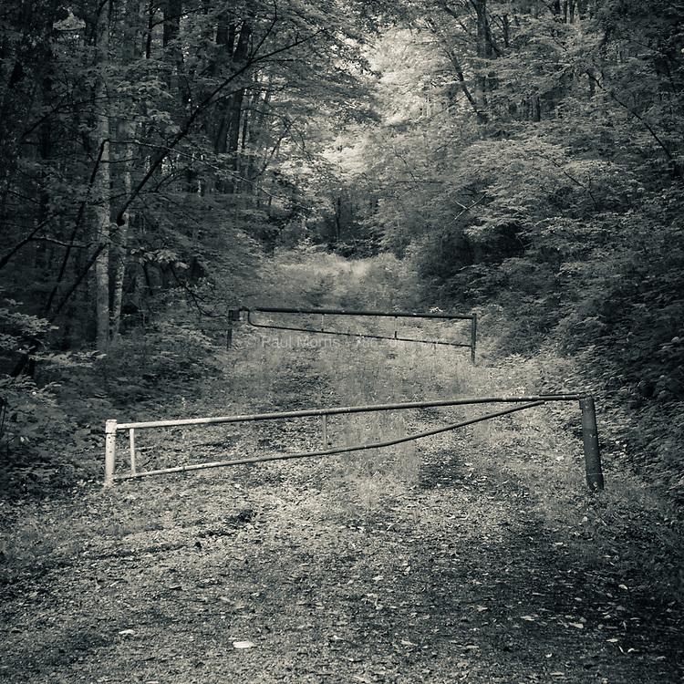 Access road, Balsam Mountain, NC