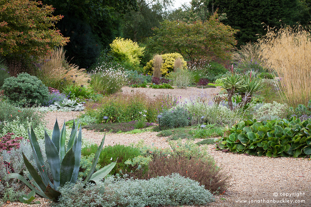 The gravel garden at Beth Chatto's in Essex