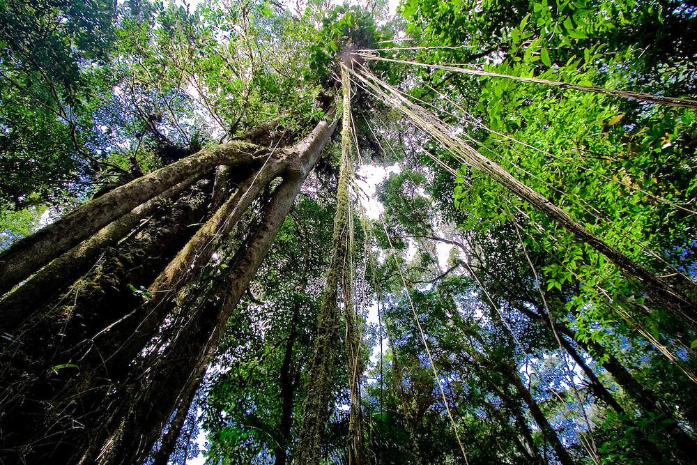 Serra Bonita forest, Bahia, Brazil