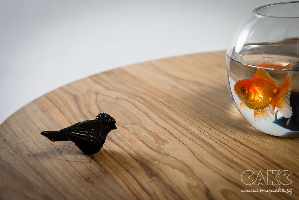 Natanel Gluska's Bird Table, prototype made in brass and unfinished teak wood as the table surface. Pictured with a goldfish.