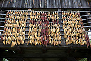 Drying corn outside a traditional Slovenian Barn at the Rogatec Open Air Museum, very close to the Croatian border, on 24th June 2018, in Rogatec, Slovenia. The museum of relocated and restored 19th and early 20th century farming buildings and houses represents folk architecture in the area south of the Donacka Gora and Boc mountains.