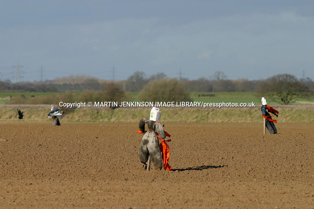 Scarecrows protect recently seeded field.