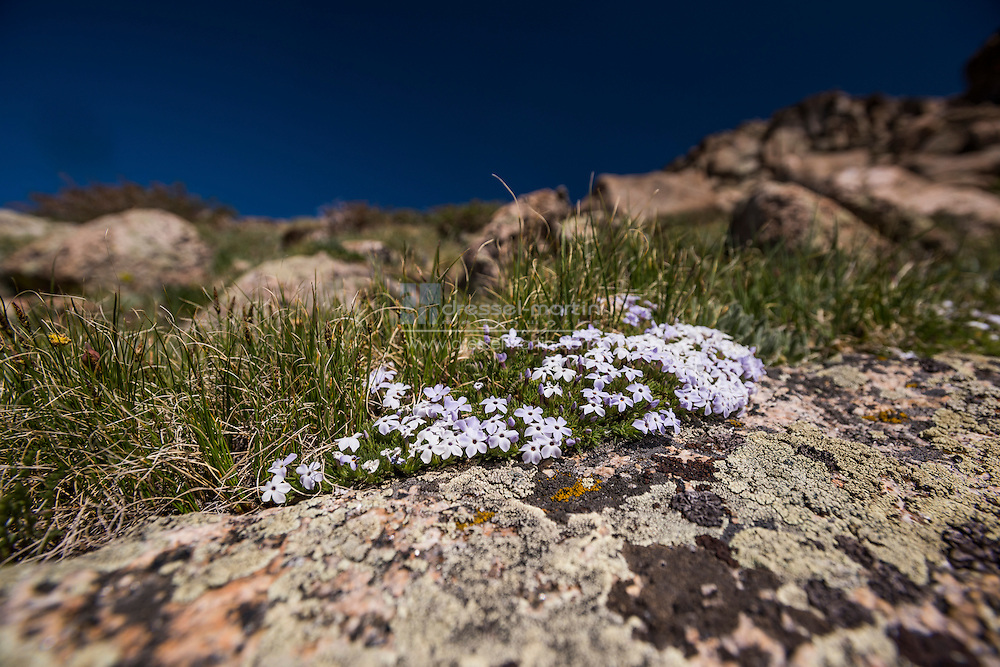 mt. goliath penman trail hiking flowers trees