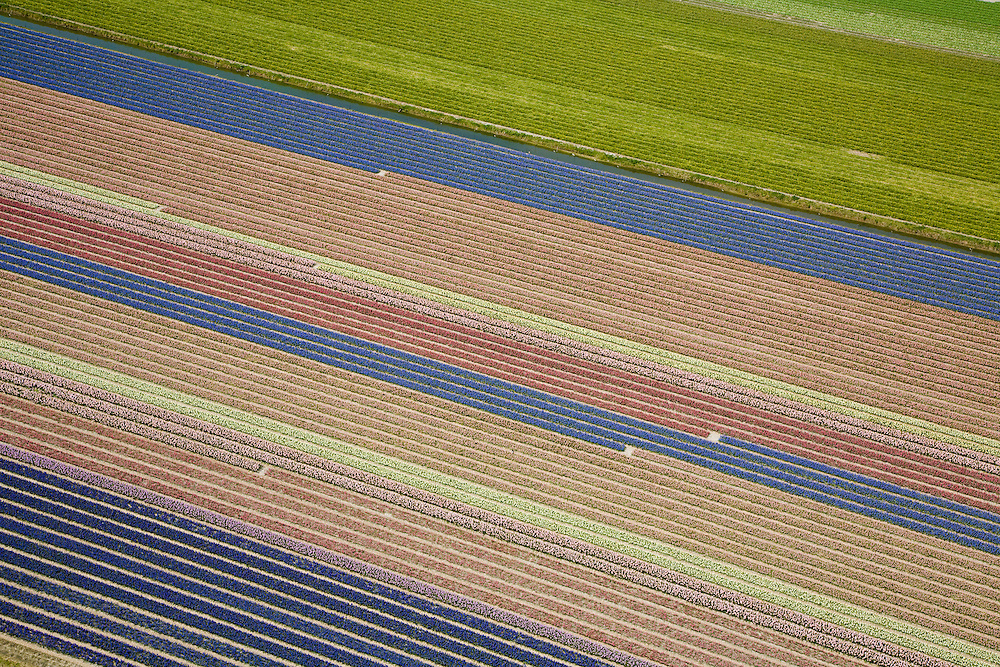 Nederland, Zuid-Holland, Hillegom, 16-04-2008; bollenstreek, percelen met bollen, gedeeltelijk in  bloei (narcissen en hyacinten); zandgrond, bollenveld, geestgrond, bloementeelt, bollenteelt, narcis, bol, hyacint*, patroon,ritme, kleur, abstract; aerial photo, bulbs, flower bulb, flowerbed , bulbfields, bloom, flowering time, toerism, attraction..luchtfoto (toeslag); aerial photo (additional fee required); .foto Siebe Swart / photo Siebe Swart