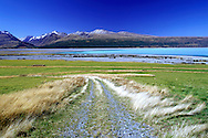 Lake Pukaki in the Aoraki National Park on the South Island of New Zealand. Shot on 6X7 transparency film.