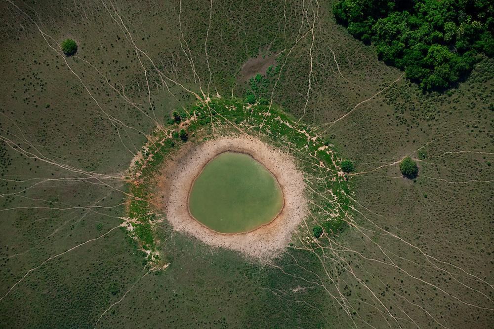 Pocone_MT, 26 de novembro de 2010...Imagens do Pantanal...Foto: JOAO MARCOS ROSA  /NITRO..