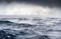 Northern fulmar (Fulmarus glacialis) above stormy winter ocean in Svalbard, Norway