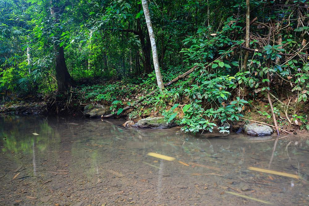 Stream in tropical rainforest. Kaeng Krachan National Park. Thailand.