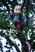 an old doll is sitting on a tree