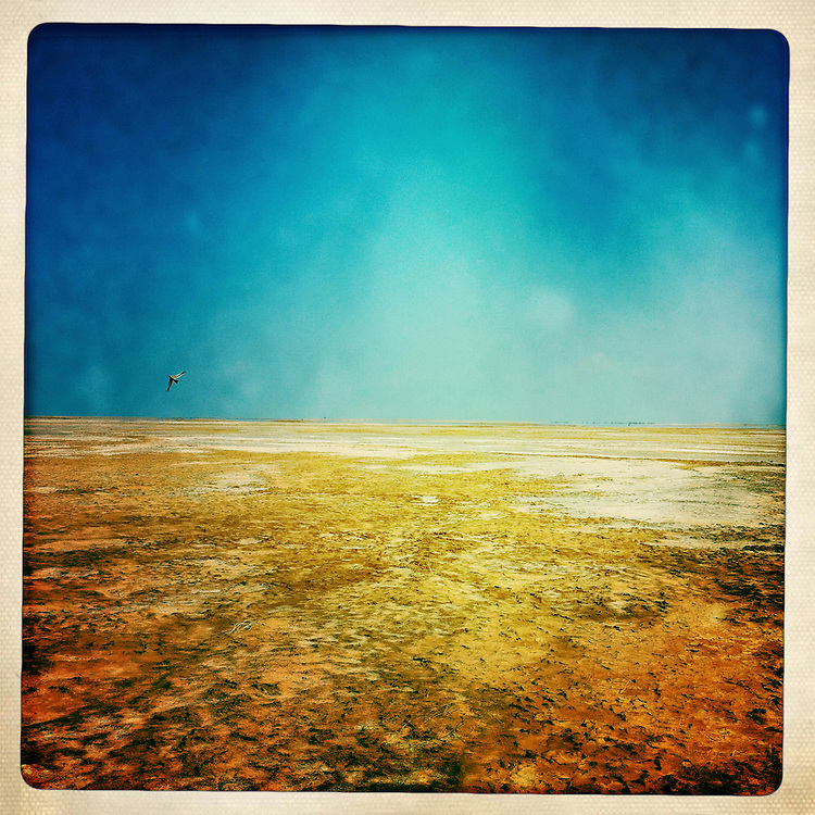 Somaliland, on the trail through the desert between Berbera And Zeila.