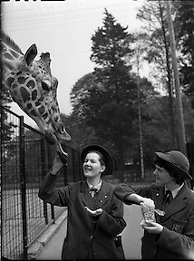 Pupils at Our Lady's Bower Convent, Athlone, visit Dublin Zoo..09.05.1960