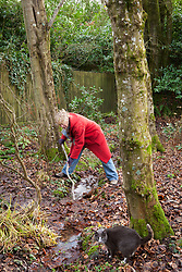Carol Klein unblocking a stream in the woodland garden at Glebe Cottage. Removing leaves and debris from under a low bridge