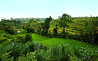 Beautiful, green landscape of rice paddies in east Bali, Indonesia.