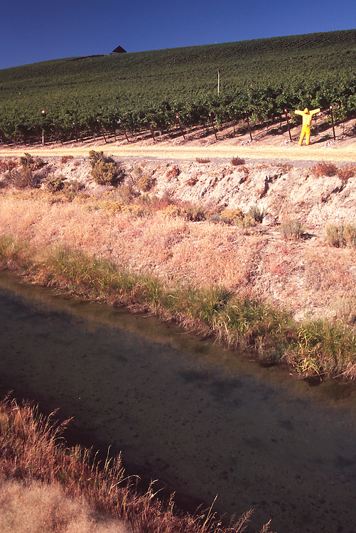 Stillwater Vineyard, Royal City, Washington, US, October 11, 2006 Stillwater Creek Vineyard, Royal City, Washington, US