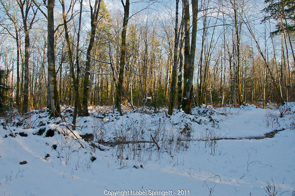 Late Winter Sun., Courtenay, British Columbia, Canada, Isobel Springett