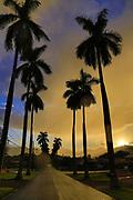 Royal Palm Drive, Wahiawa, Oahu, Hawaii