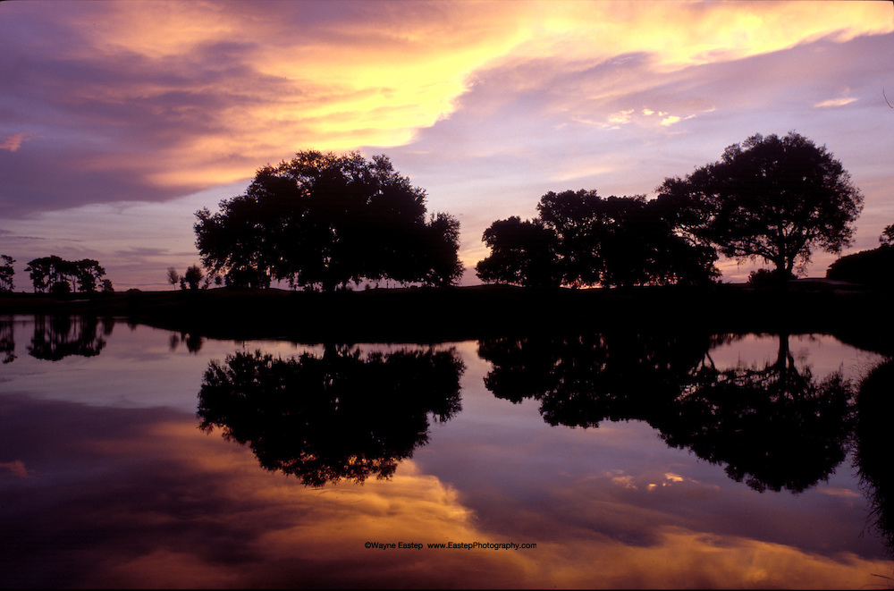 Live Oaks reflecting in lake at sunrise, Sarasota, Florida, sunrise, Oaks,Trees,