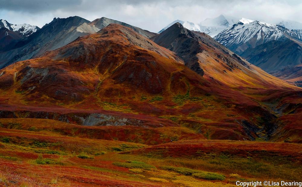 Autumn in Denali National Park near Eielson Visitor Center, Alaska