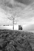 North Carolina Museum of Art (NCMA) Askew Tree. Raleigh | Architect: Thomas Phifer, Landscape Architect: Surface 678