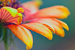 Vibrant Orange Petals With A Fine Art Flare