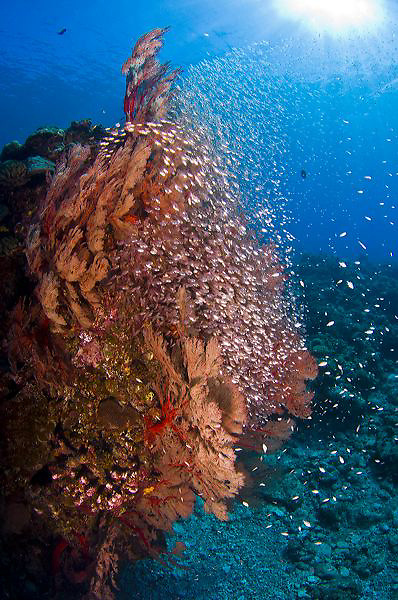 Aka Jima Diving, Kerama Islands, Okinawa, Japan