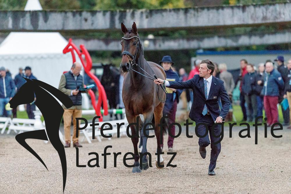 MEIER Kai-Steffen (GER), QC ROCK AND ROLL<br /> Le Lion d'Angers - FEI Eventing World Breeding Championship 2019<br /> 2. Verfassungsprüfung<br /> 20. Oktober 2019<br /> © www.sportfotos-lafrentz.de/Stefan Lafrentz