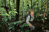 Orangutan researcher Cheryl Knott follows an orangutan through the rain forest of Gunung Palung.