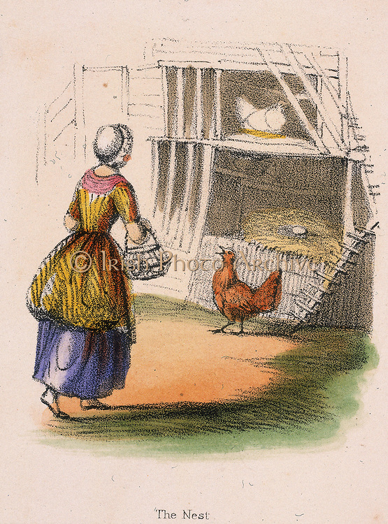 Chickens. Collecting eggs from nest. From 'Graphic Illustrations of Animals and Their Utility to Man', London, c1850.