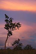 Savannah Scenic<br /> Rupununi<br /> GUYANA<br /> South America