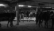Horses and grooms wait for their riders during the Greenhawk Canadian Championship - Round 1. TORONTO, CANADA.  November 4 2016