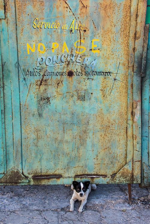 A small watchdog guards a rusty doorway in Havana, Cuba.