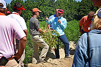 Extension specialist Dr. Angela Post shows agents and directors a sample of a diseased hemp plant during a tour of Broadway Hemp's farm in Harnett County.