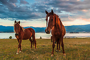 A herd of horses by Batak lake in Rhodope Mountains